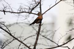 桜ヶ丘公園のアトリ