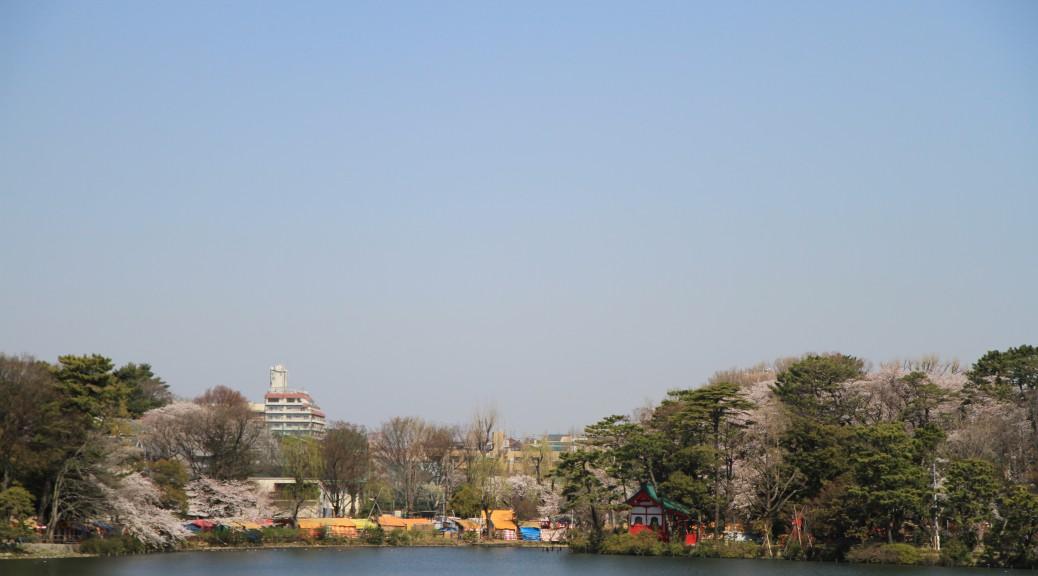桜の季節-2012
