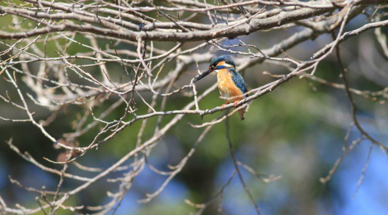 洗足池の野鳥