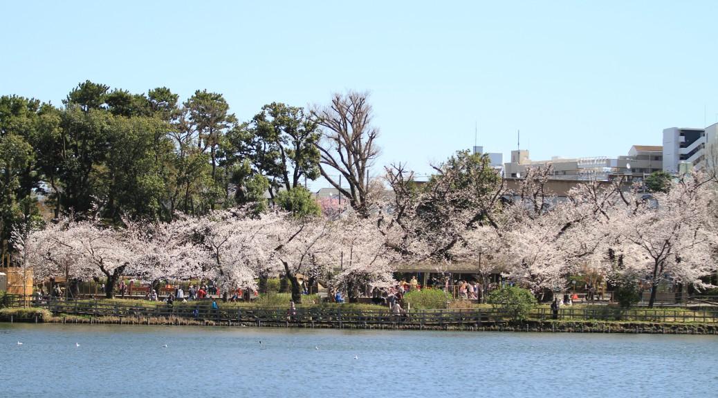 桜の季節-2014