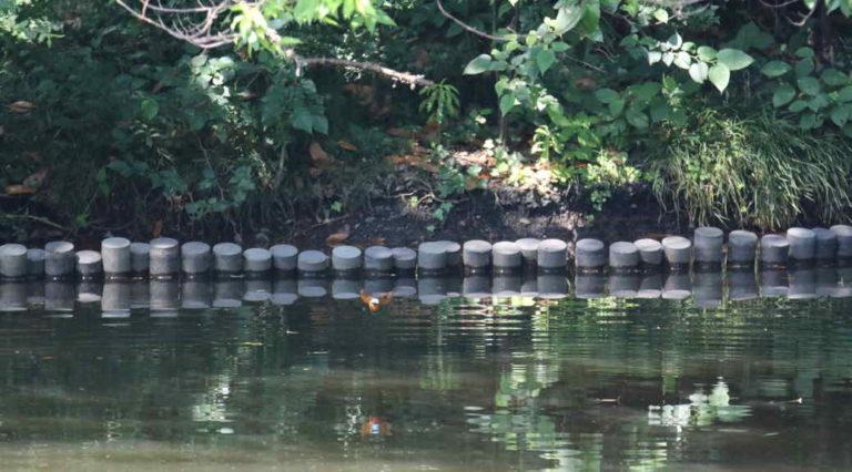 明治神宮 北池のカワセミ・・・