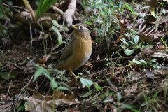 桜ヶ丘公園の野鳥