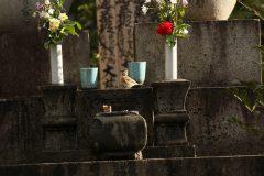 洗足池(東京都大田区)のアトリ