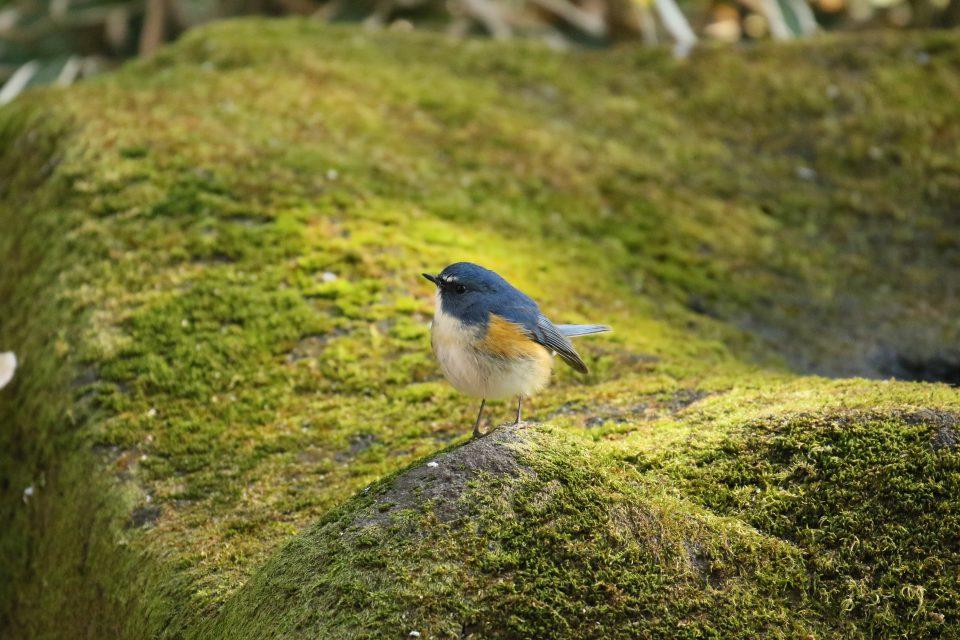 里見公園の野鳥たち