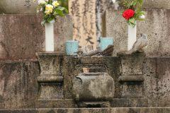 洗足池(東京都大田区)のヒヨドリ