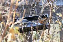 東京都大田区立洗足池公園のアトリ