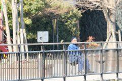 東京都大田区立小池公園のカワセミ
