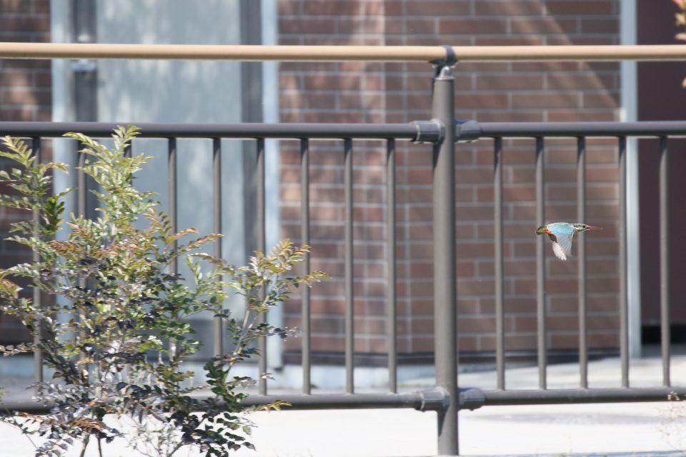 小池公園の野鳥