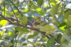 大田区立洗足池公園のアトリ