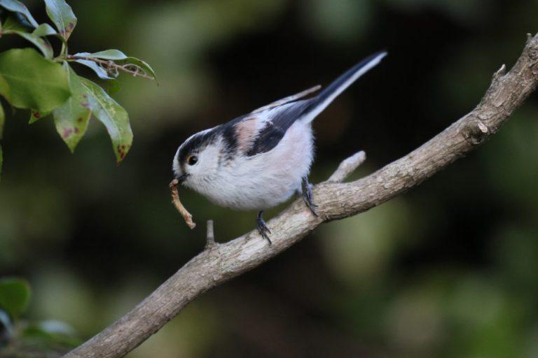 薬師池公園の野鳥たち!