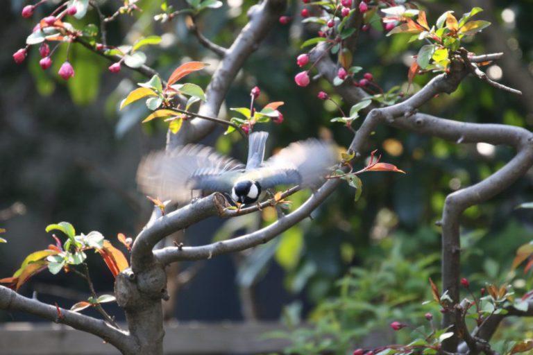 お庭の野鳥