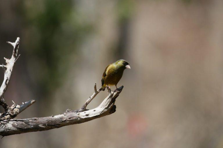 西湖 野鳥の森公園