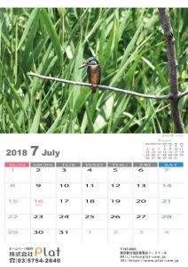 2018年の野鳥カレンダー