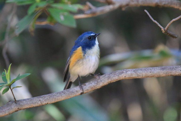 里見公園の野鳥