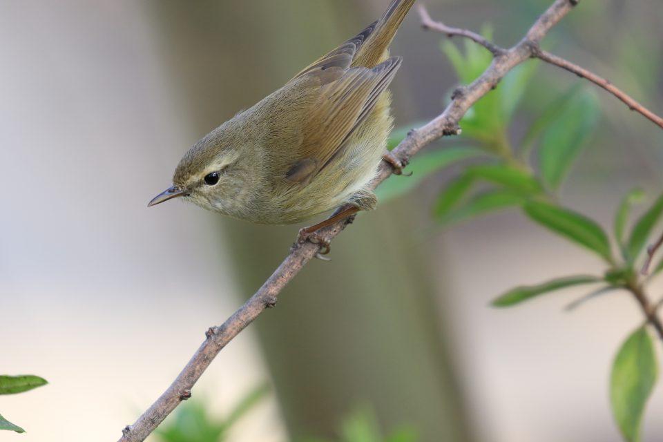 大田区の鳥