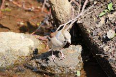 洗足池のシメ