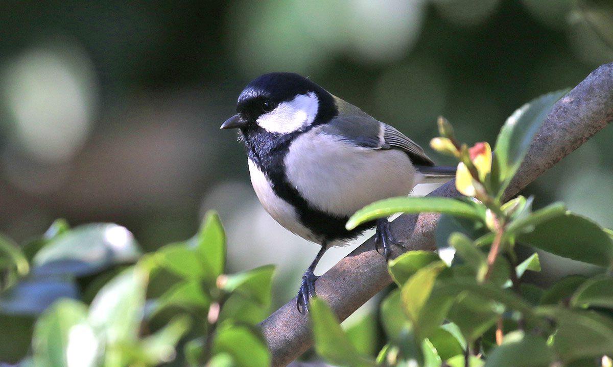 庭に来る野鳥