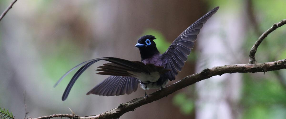東京近郊の野鳥さん