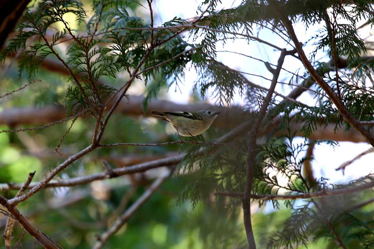 秋ヶ瀬公園の野鳥たち
