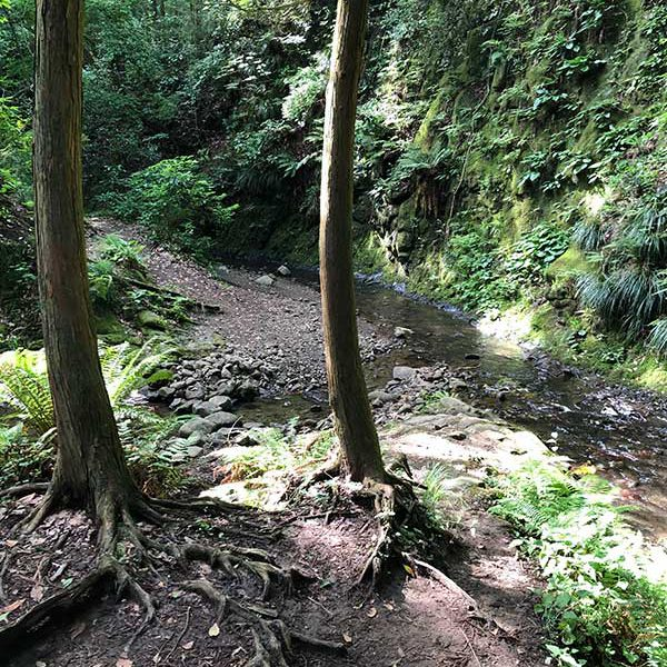 森戸川源流