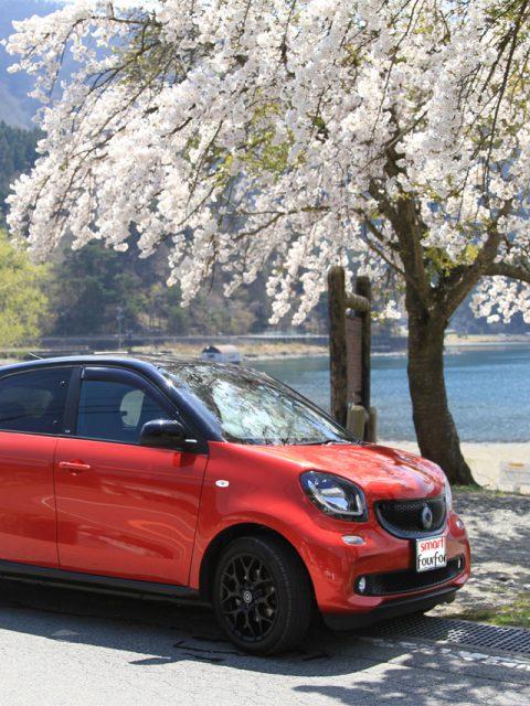 西湖の桜とスマート フォーフォー